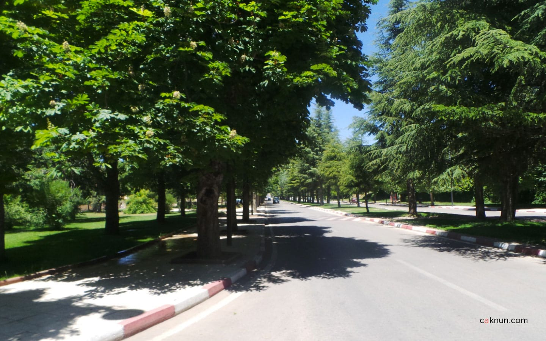 Jalan yang hijau dan sangat terawat.
