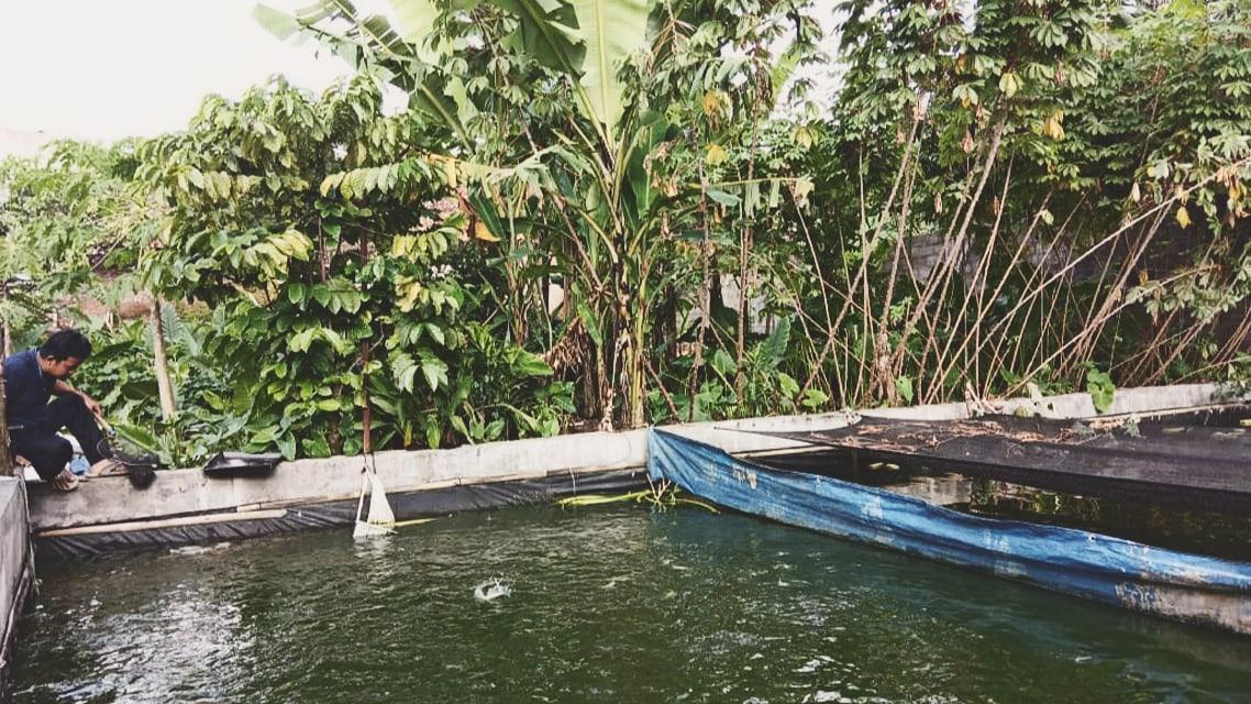 Kolam Ikan yang dikelola teman-teman Daulat Malaya.