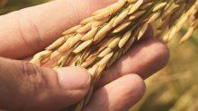 Subsidi Agrokultur